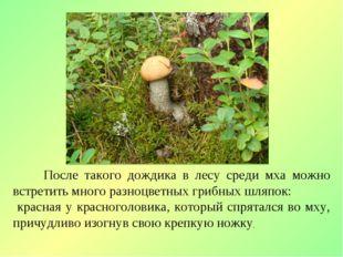 После такого дождика в лесу среди мха можно встретить много разноцветных гри