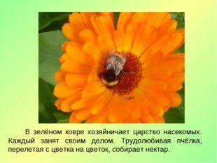 В зелёном ковре хозяйничает царство насекомых. Каждый занят своим делом. Тру