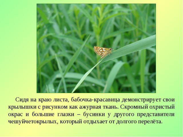 Сидя на краю листа, бабочка-красавица демонстрирует свои крылышки с рисунком...