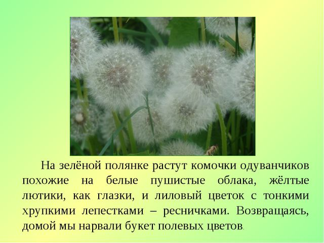 На зелёной полянке растут комочки одуванчиков похожие на белые пушистые обла...