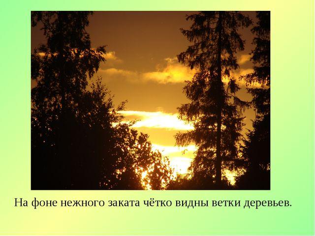На фоне нежного заката чётко видны ветки деревьев.