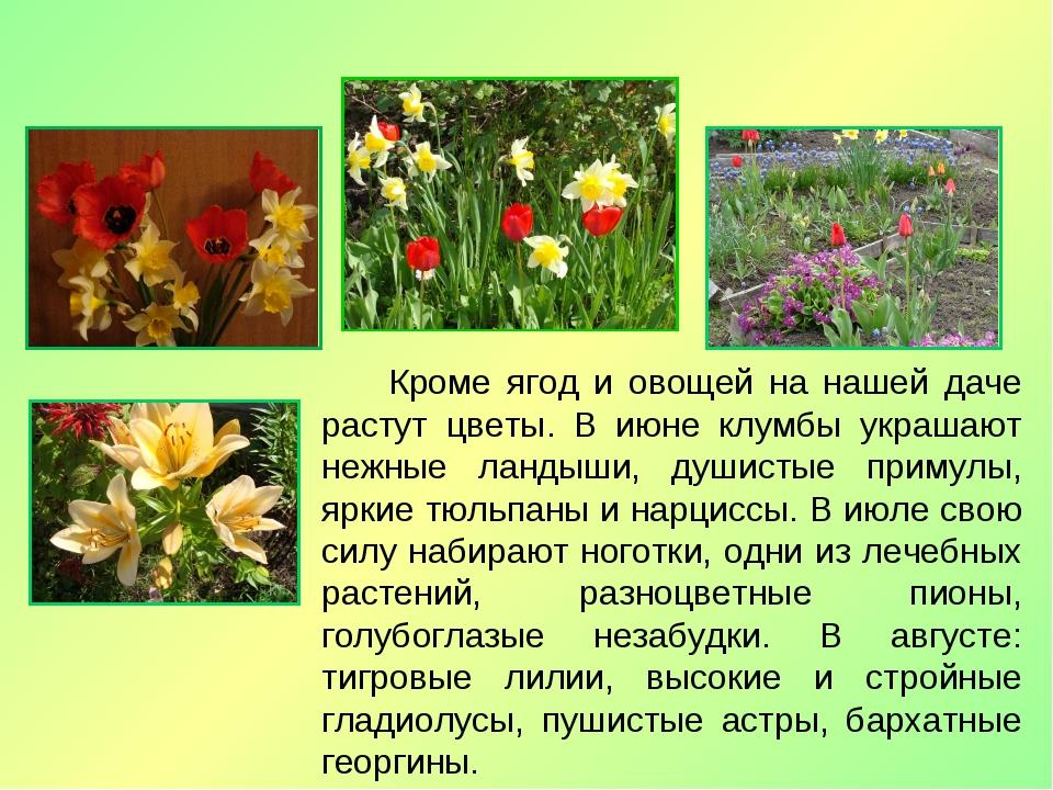 Кроме ягод и овощей на нашей даче растут цветы. В июне клумбы украшают нежны...