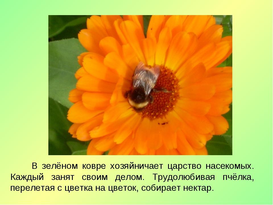 В зелёном ковре хозяйничает царство насекомых. Каждый занят своим делом. Тру...