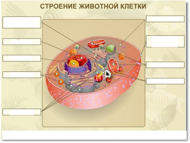 C:\Documents and Settings\Ольга\Рабочий стол\img2.jpg