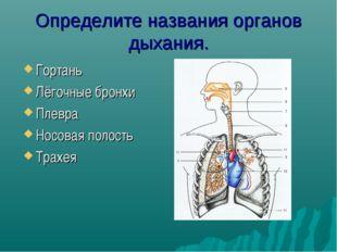 Определите названия органов дыхания. Гортань Лёгочные бронхи Плевра Носовая п