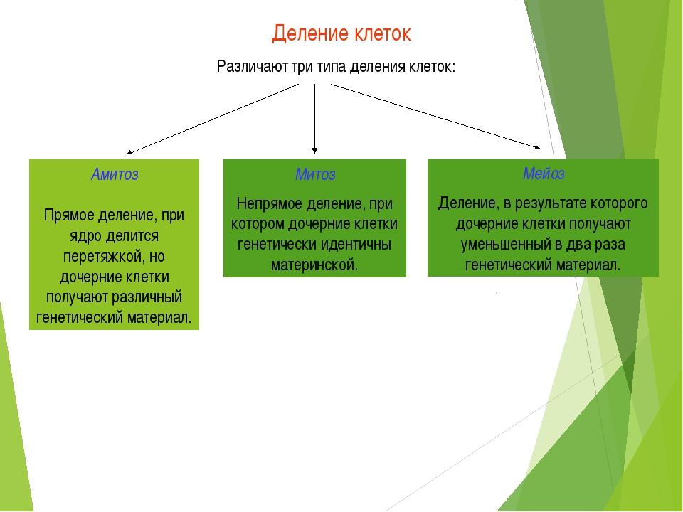 Деление клеток Различают три типа деления клеток: Амитоз Прямое деление, при...
