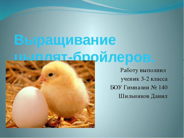Выращивание цыплят-бройлеров. Работу выполнил ученик 3-2 класса БОУ Гимназии...