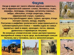 Нигде в мире нет такого обилия крупных животных, как в африканской саванне: с