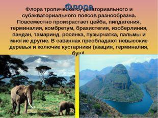 Флора тропического, экваториального и субэкваториального поясов разнообразна.