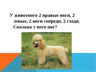 У животного 2 правые ноги, 2 левые, 2 ноги спереди, 2 сзади. Сколько у него