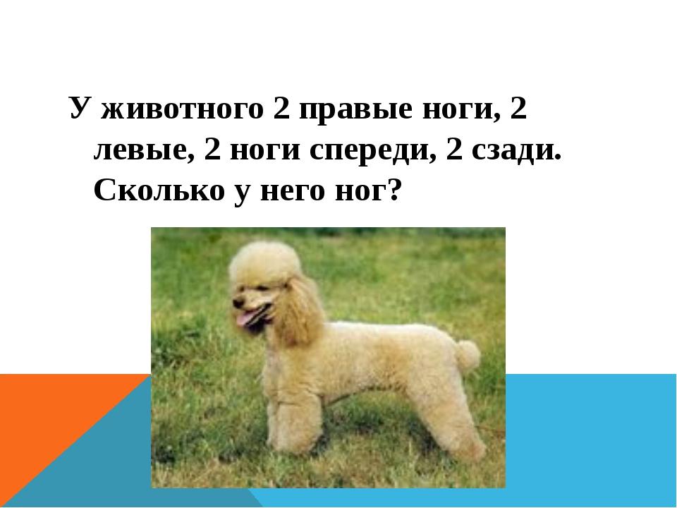 У животного 2 правые ноги, 2 левые, 2 ноги спереди, 2 сзади. Сколько у него...