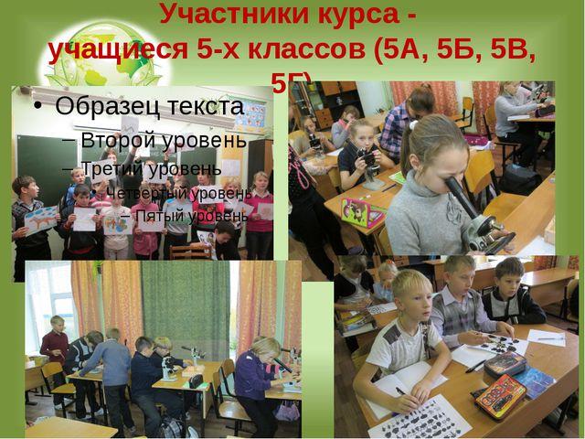 Участники курса - учащиеся 5-х классов (5А, 5Б, 5В, 5Г)