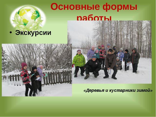 Основные формы работы Экскурсии «Деревья и кустарники зимой»