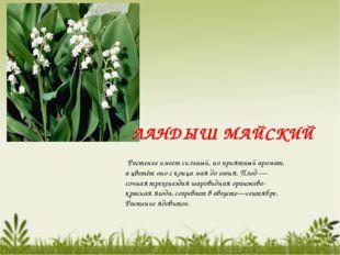 Растение имеет сильный, но приятный аромат, а цветёт оно с конца мая до июня