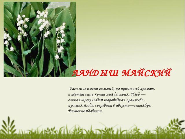 Растение имеет сильный, но приятный аромат, а цветёт оно с конца мая до июня...