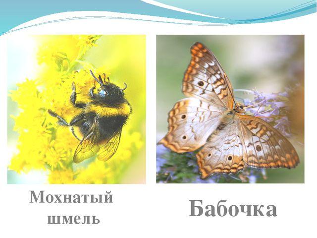 Мохнатый шмель Бабочка