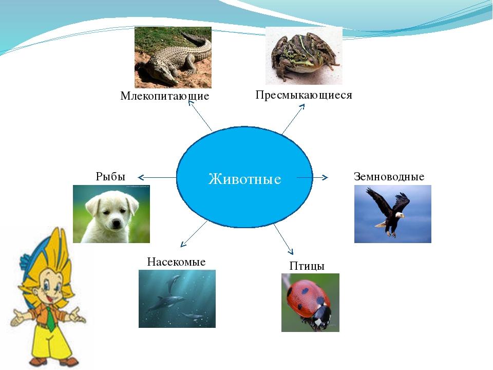 Животные Пресмыкающиеся Земноводные Млекопитающие Рыбы Насекомые Птицы