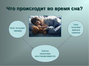 Что происходит во время сна? Мозг получает зарядку Клетки организма восстанав