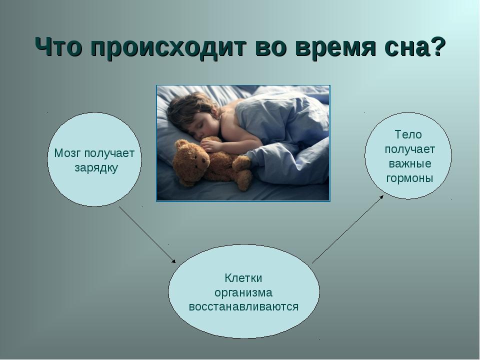 Что происходит во время сна? Мозг получает зарядку Клетки организма восстанав...