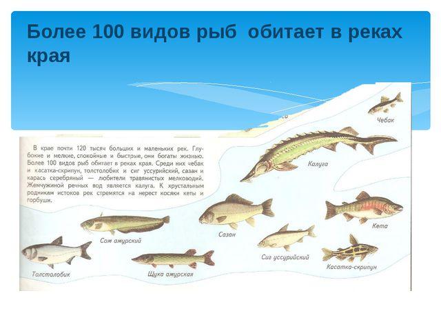 Более 100 видов рыб обитает в реках края