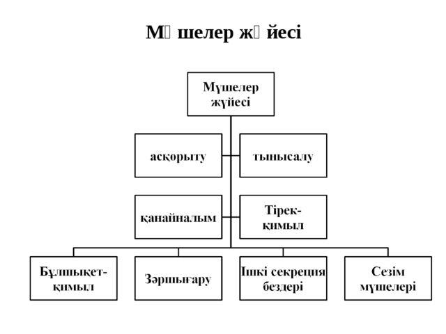 Мүшелер жүйесі