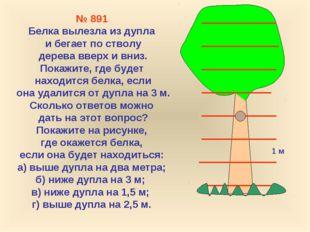 1 м № 891 Белка вылезла из дупла и бегает по стволу дерева вверх и вниз. Пока