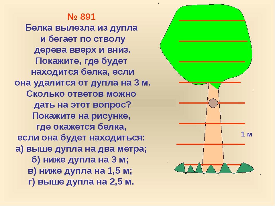 1 м № 891 Белка вылезла из дупла и бегает по стволу дерева вверх и вниз. Пока...
