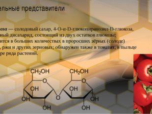 Мальтоза— солодовый сахар, 4-О-α-D-глюкопиранозил-D-глюкоза, природныйдисах