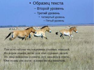 Там есть табуны чистокровных степных лошадей, Их норов опасен, но не для эти