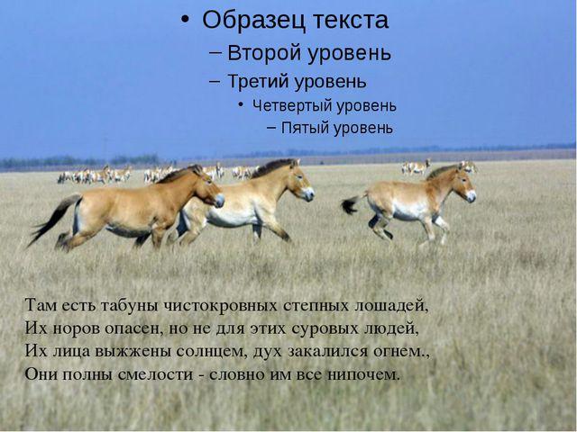 Там есть табуны чистокровных степных лошадей, Их норов опасен, но не для эти...