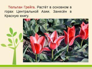 Тюльпан Грейга. Растёт в основном в горах Центральной Азии. Занесён в Красну