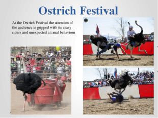 Ostrich Festival At the Ostrich Festival the attention of the audience is gri