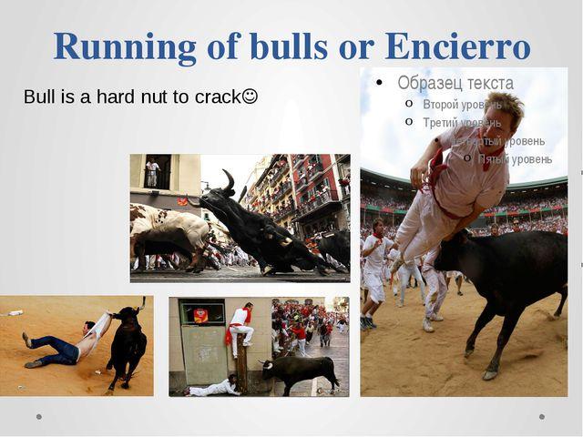 Running of bulls or Encierro Bull is a hard nut to crack
