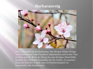 Barbarazweig Der 4. Dezember ist der Barbaratag. Am Morgen werden Zweige von