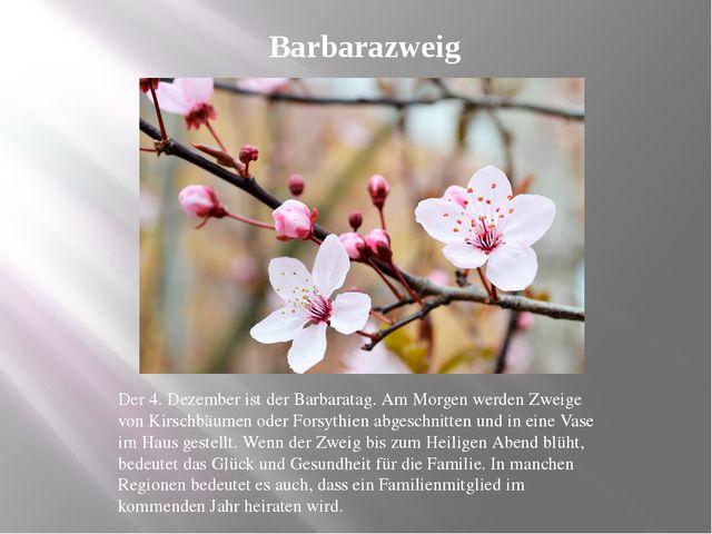 Barbarazweig Der 4. Dezember ist der Barbaratag. Am Morgen werden Zweige von...