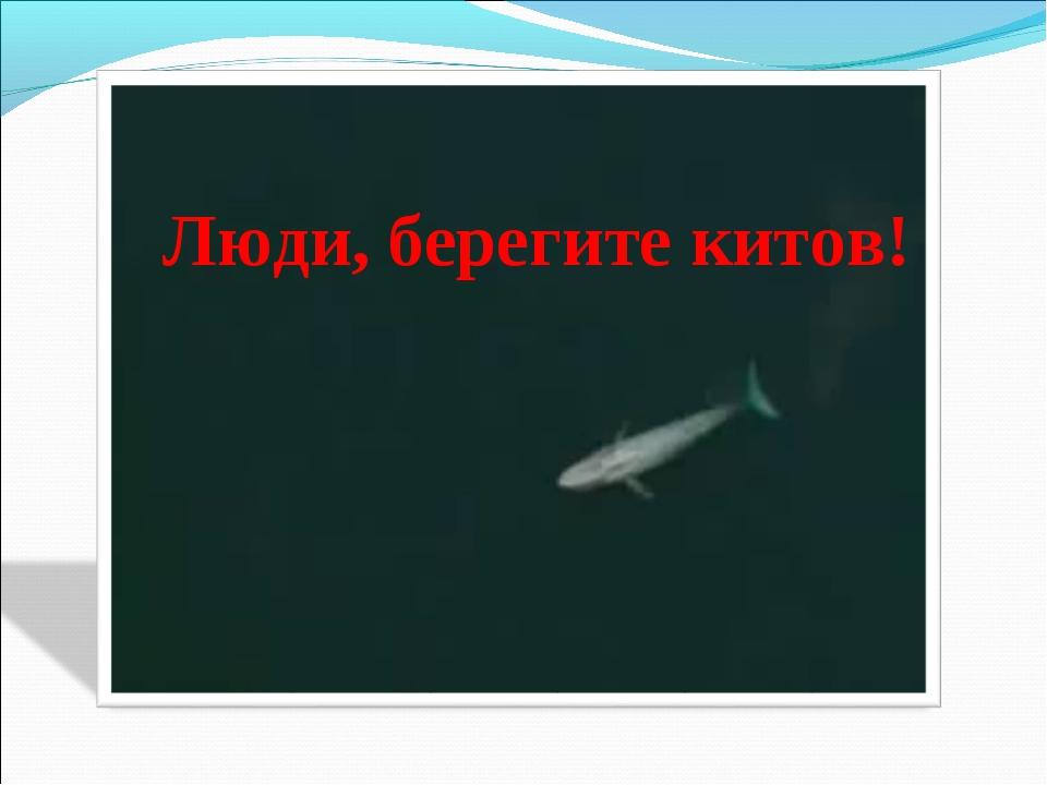 Люди, берегите китов!