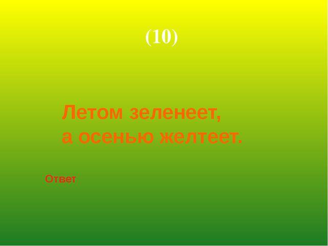 Летом зеленеет, а осенью желтеет. Ответ (10)