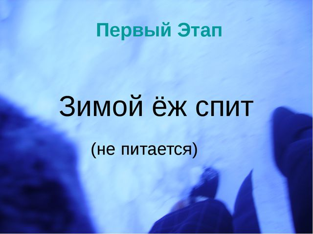 Первый Этап Зимой ёж спит (не питается)
