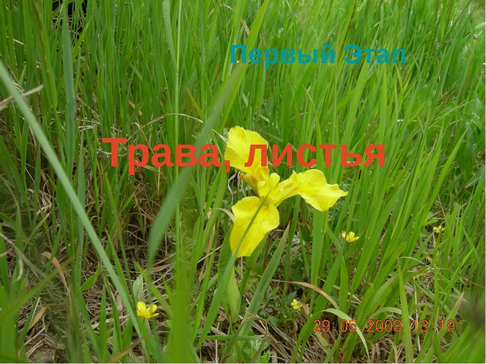 Трава, листья Первый Этап