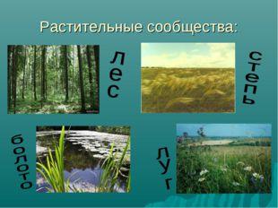Растительные сообщества: