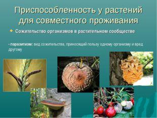 Приспособленность у растений для совместного проживания Сожительство организм
