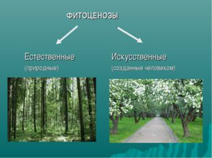 ФИТОЦЕНОЗЫ Естественные (природные) Искусственные (созданные человеком)