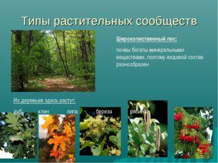 Типы растительных сообществ Широколиственный лес: почвы богаты минеральными в