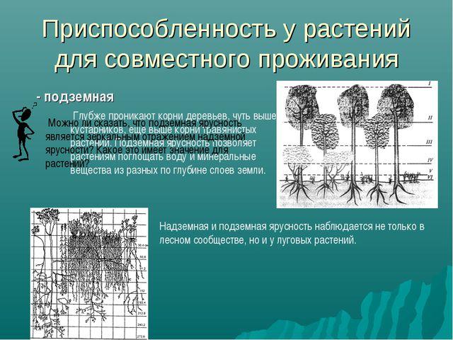 Приспособленность у растений для совместного проживания - подземная Глубже пр...