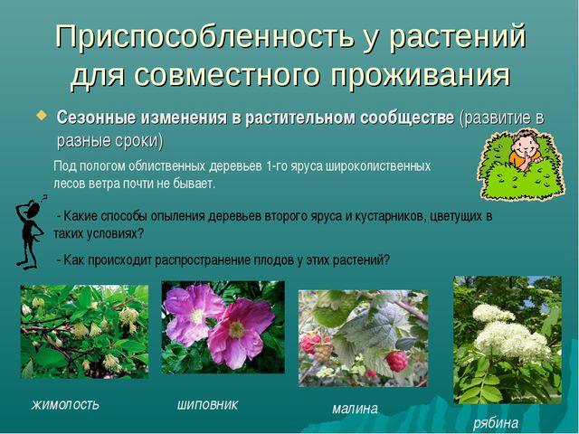 Приспособленность у растений для совместного проживания Сезонные изменения в...