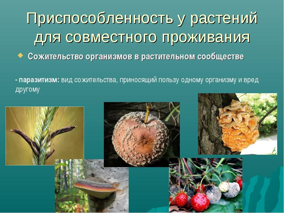 Приспособленность у растений для совместного проживания Сожительство организм...