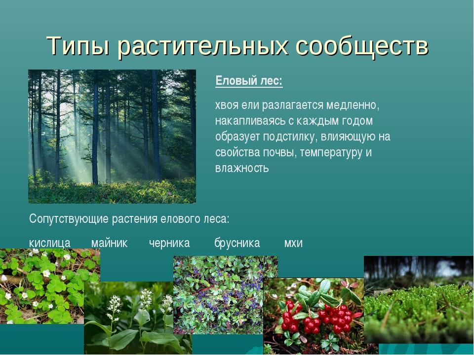 Типы растительных сообществ Еловый лес: хвоя ели разлагается медленно, накапл...