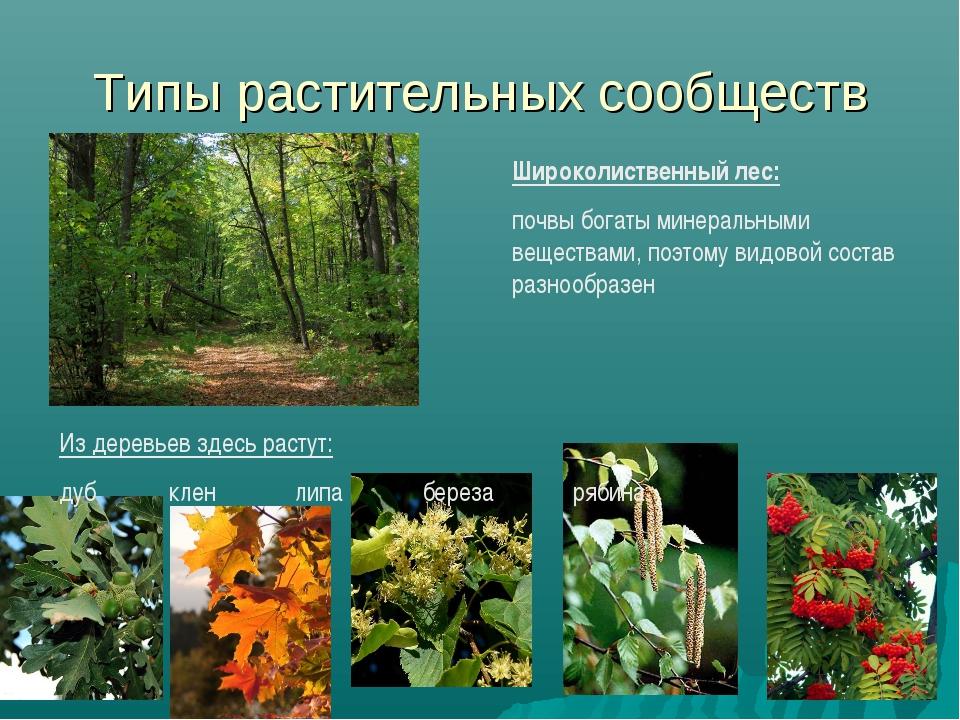 Типы растительных сообществ Широколиственный лес: почвы богаты минеральными в...