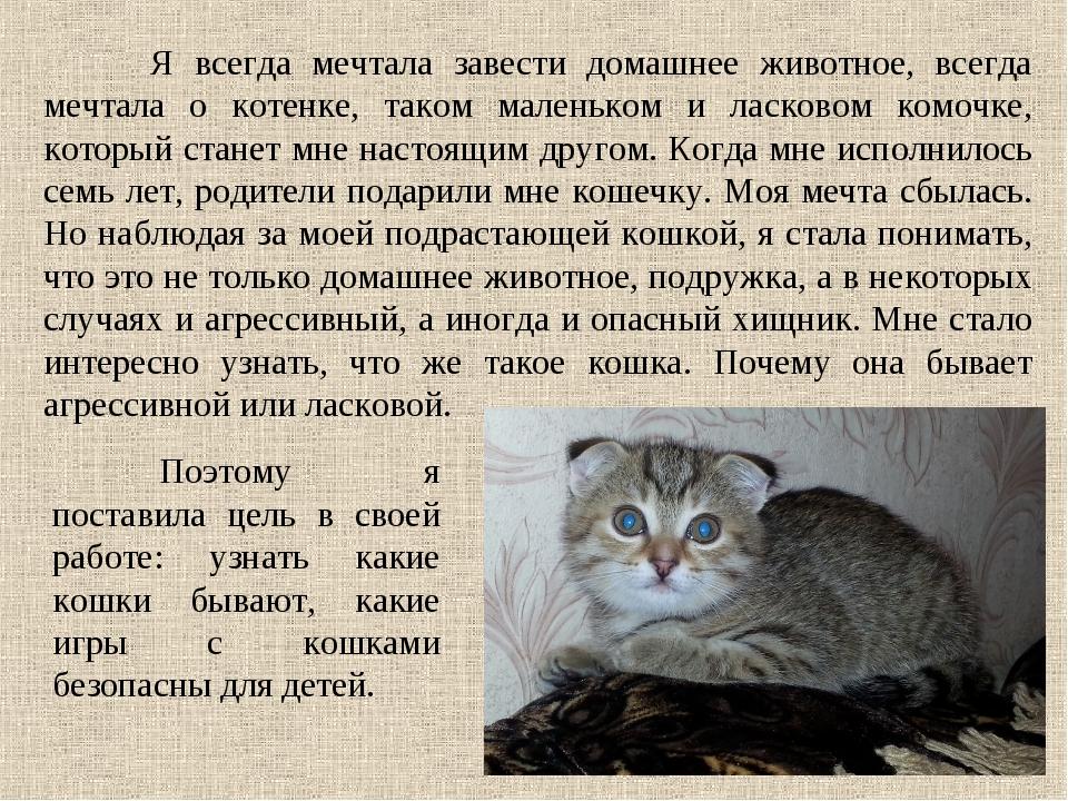 Я всегда мечтала завести домашнее животное, всегда мечтала о котенке, таком...