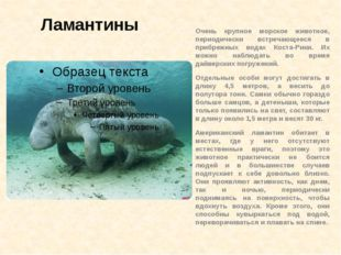 Ламантины Очень крупное морское животное, периодически встречающееся в прибре